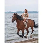 Катание на лошадях, обучение верховой езде. фото