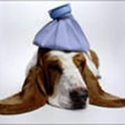 Вызов врача ,лечение, послеоперационный уход за животными фото