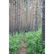 Природа казахстана фото