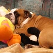 Скорая ветеринарная помощь на дому фото