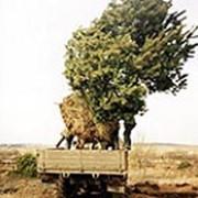 Посадка крупномеров - посадка деревьев фото