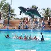 Дельфинарий фото