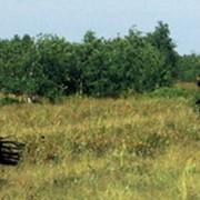 Зилимский конный тур фото