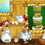 Пробиотическая добавка для лечения и роста сельскохозяйственной птицы фото