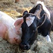 Оборудование, инструменты для животноводства фото