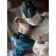 Вакцины для профилактики болезней птиц