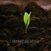 фото предложения ID 17720935
