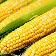 Кукуруза купить оптом фото