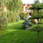 Озеленение и благоустройство. фото