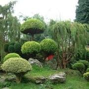 Подбор растений фото