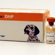 Живая сухая вакцина Нобивак DHP фото