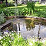Оформление растениями водных сооружений фото