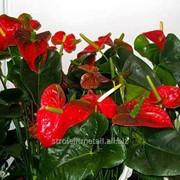 Устройство цветников и клумб №18 фото