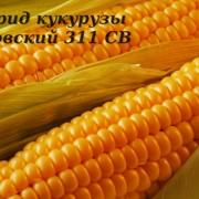 Гибрид кукурузы Розовский 311 СВ ФАО 310 фото