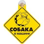 """Знак-табличка на присоске """"Злая собака в машине"""" фото"""