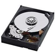 Жесткий диск Western Digital 500 Gb фото