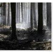 Комплексы деревообрабатывающие фото
