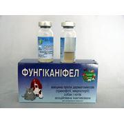 Вакцина против трихофитии и микроспории собак и кошек фото