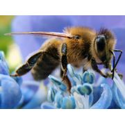 Препараты для стимуляции жизнедеятельности пчел оптовая и розничная торговля ветеринарными препаратами для пчел фото