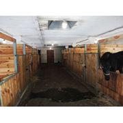 Конюшня (436м2) и ограждение для коневодства фото