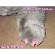 фото предложения ID 5065813