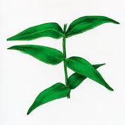 Альтернатива вазелину - Vaseline Type B растительного происхождения фото