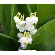 Растительные экстракты купить оптом Украина фото