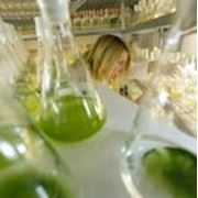 Хлорелла (chlorella vulgaris) в медицине фото