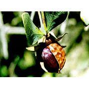 Масло жожоба известно своими противовоспалительными свойствами что позволяет бороться с покраснениями и воспалением кожи при дерматитах можно применять при прыщах экземе псориазе нейродермите и т.д. В косметологии оно делает чудеса. фото
