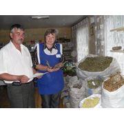 заготівля (збут) лікарсько-технічної сировини та сільськогосподарської продукції фото