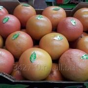 Грейпфрут, сорт Стар Руби, Турция фото