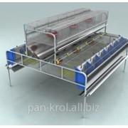 Клетка для кроликов маточная двухъярусная КМ-2 фото