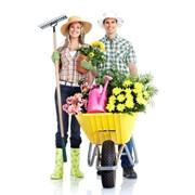 Садівник, послуги садівника, догляд за садом Київ. Садовник, услуги садовника, уход за садом Киев фото