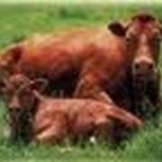 Препараты ветеринарные пртивомаститные фото