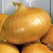 Семена чернушки штудгартен фото
