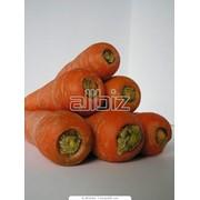Семена моркови Колтан F1 фото
