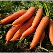 Морковь очищенная в вакуумной упаковке фото