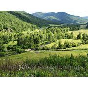 Земельный участок в Алтае фото
