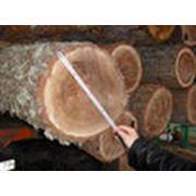 Пиломатериалы из твердых пород дерева. фото