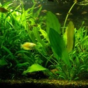 Смешанный аквариум. Акватеррариум фото