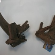 Корень Мангрового дерева 15-30 см фото