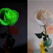 Цветы светящиеся в темноте фото
