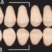 Двухслойные зубы в бобинах фото