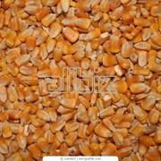 Сушка зерновых культур фото
