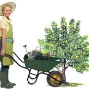 Садовник фото