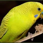 Корма для волнистых попугаев Биотех фото