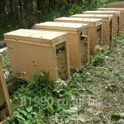 Пчелопакеты пчелы Карпатка фото