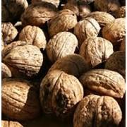 Орехи грецкие в Молдове фото