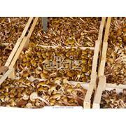 Расчеты стоимости мицелий грибы