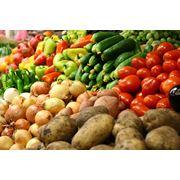 Продукция сельского хозяйства Выращивание и продажа плодоовощных культур: морковь помидоры кабачки и проч. Саженцы яблонь. фото